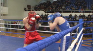 Stock Video Footage of boxing