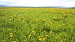 Grays Lake Meadow Flowers B1 Stock Footage