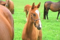 Foal Close-up Footage