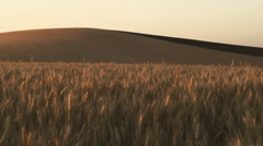 Wheat 133 Stock Footage