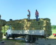 Farmers Loading Hay 02 SD Footage