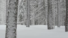 Snowy Pine Forest Stock Footage