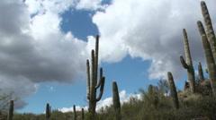 Saguaro Cactus Landscape Stock Footage