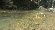 Stock Video Footage of Kziv river at spring. Murmuring river.