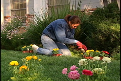 Stock Video Footage of Woman gardening