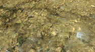 Stock Video Footage of Kziv river at spring.Bottom of a shallow river.