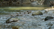 Stock Video Footage of Kziv river at spring. Water streaming along trees and rocks.