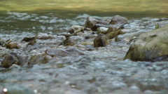 Kziv river at spring. Water streaming along trees and rocks. Stock Footage