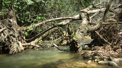Kziv river at spring. Water streaming under the big dead tree. Stock Footage