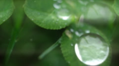 Macro drop - stock footage