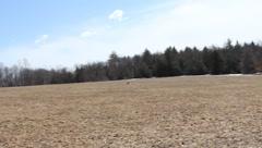 Dog Running Around Empty Field  Stock Footage