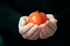 Women hands holding red fresh tomato - stock footage