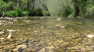 Kziv river at spring. Bottom of a shallow river. Stock Footage