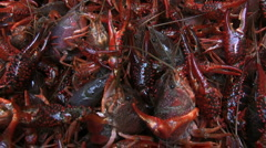 Live crawfish02 Stock Footage