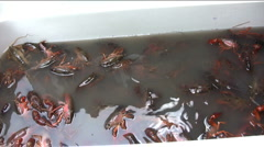 Crawfish purging in ice chest Stock Footage