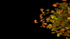 Autumn leaf transition Stock Footage