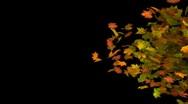 Autumn leaf transition Stock Footage