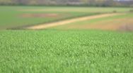 Stock Video Footage of shallow focus wind blowing on a green field seamless loop
