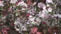 Spring in the Park - stock footage