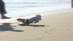 Man Plays with Little Dog on Beach Stock Footage