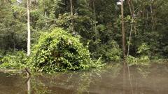 Drifting through an Amazonian oxbow lake Stock Footage