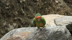 Parrot on the Inca Trail in Peru Stock Footage