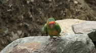 Stock Video Footage of Parrot on the Inca Trail in Peru