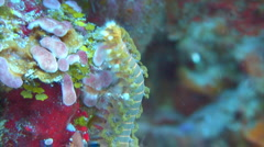 Bristle worm crawling over coral Stock Footage