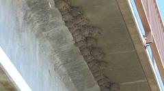 Birds Nest Under Bridge Stock Footage