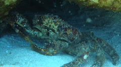 King Crab in the Caribbean Stock Footage