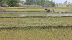 Farming, Nepal Stock Footage