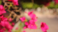 Shallow racked focus beautiful spring pink flowers Stock Footage