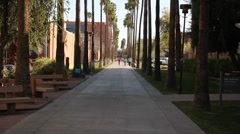 "ASU Arizona State University ""Palm Walk"" Pan Up - stock footage"