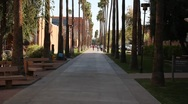 "Stock Video Footage of ASU Arizona State University ""Palm Walk"" Pan Up"