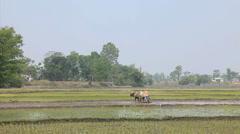 Farming, Nepal Stock Footage