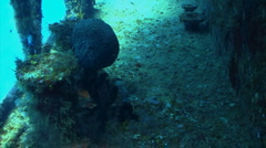 Shipwreck underwater searching the ship Stock Footage