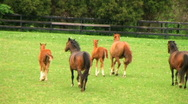 Horses Running Stock Footage