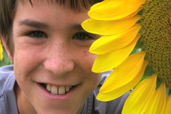Boy Beside Sunflower Stock Footage