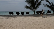 Dog walking on a sand beach and people lying and resting on beds Stock Footage