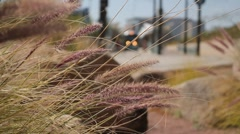 Shallow focus long wild grass blowing in the wind - train in background Stock Footage