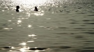 Two women swimming in beautiful exotic sparkling ocean at sunset in island Stock Footage