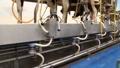 dairy farming 7054 Footage
