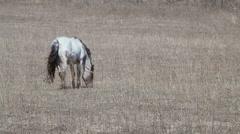 Wild mare Stock Footage