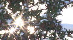 Snow Tree Sunburst 3 Stock Footage