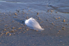 Feather Floating on Shore Stock Footage