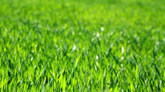 lush green grass - stock footage