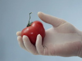 Scientist hands in rubber gloves examining tomato NTSC Stock Footage