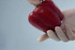 Scientist hands in rubber gloves examining red pepper NTSC Stock Footage