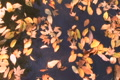 Drifting Leaves Time Lapse Footage