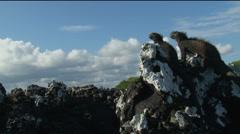 2 Iguanas on a rock, Galapagos  Stock Footage
